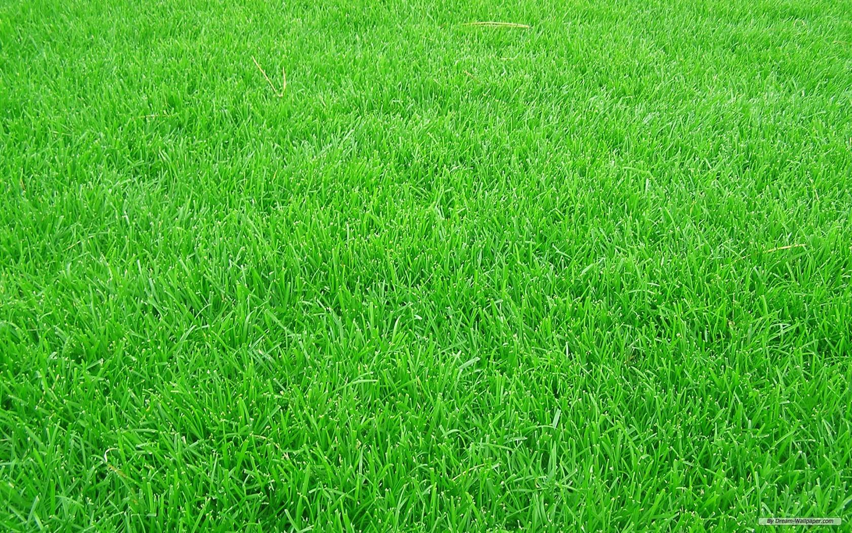 grass-background-28